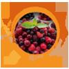 LIFE BALANCE obrok - šumsko voće summer mix